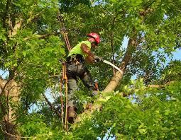Tree Service Naples